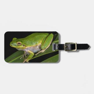 Green Tree Frog (Hyla cinerea) 2 Luggage Tag