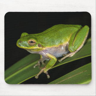 Green Tree Frog (Hyla cinerea) 2 Mouse Pad
