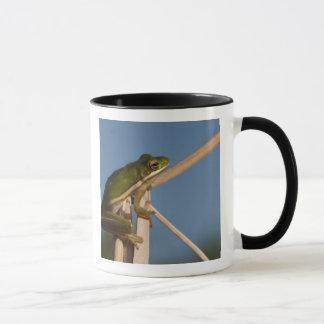 Green Tree Frog Hyla cinerea) Little St Mug