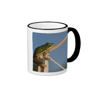 Green Tree Frog Hyla cinerea Little St Mug