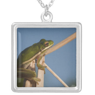 Green Tree Frog Hyla cinerea) Little St Silver Plated Necklace