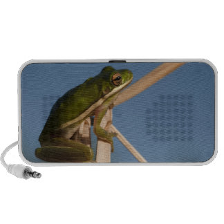 Green Tree Frog Hyla cinerea Little St Speaker System