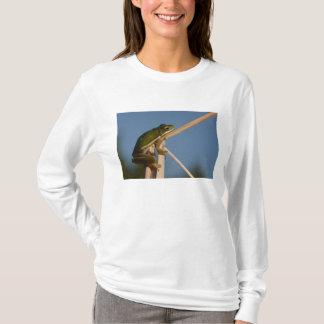 Green Tree Frog Hyla cinerea) Little St T-Shirt