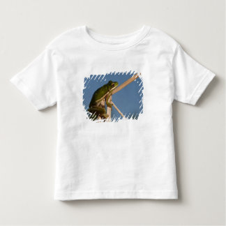 Green Tree Frog Hyla cinerea) Little St Toddler T-Shirt