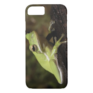 Green Tree Frog, Hyla cineria, iPhone 8/7 Case