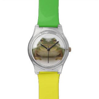 Green tree frog (Hylidae cinerea) Watch