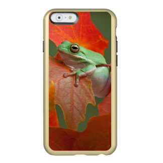 Green Tree Frog In Fall Incipio Feather® Shine iPhone 6 Case