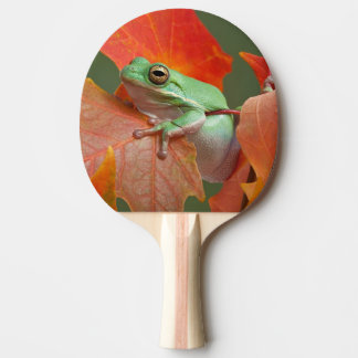 Green Tree Frog In Fall Ping Pong Paddle
