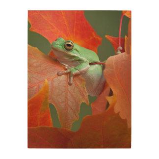 Green Tree Frog In Fall Wood Print