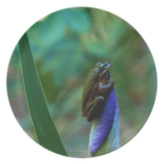 Green Tree Frog on Iris Dinner Plates