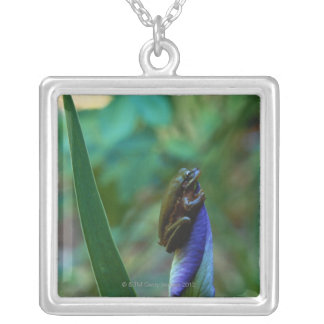 Green Tree Frog on Iris Silver Plated Necklace