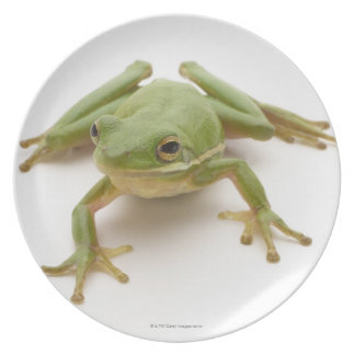 Green Tree Frog Plate