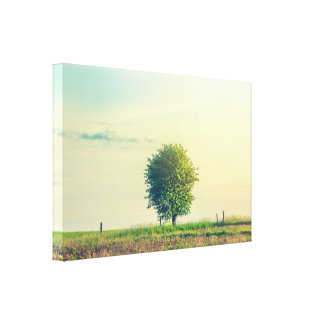 Green tree in the morning sunrise canvas print