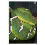 Green Tree Python Dry Erase Whiteboards