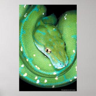 Green Tree Python Poster