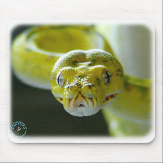 Green Tree Snake 9Y195D-033 Mouse Pads