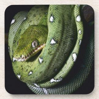 Green tree snake emerald boa in Bolivia Beverage Coasters