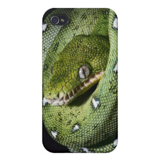 Green tree snake emerald boa in Bolivia iPhone 4/4S Cover