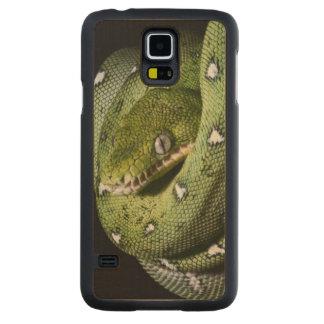 Green tree snake emerald boa in Bolivia Maple Galaxy S5 Slim Case