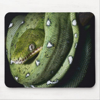 Green tree snake emerald boa in Bolivia Mouse Pad