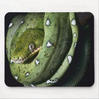 Green tree snake emerald boa in Bolivia Mousepad