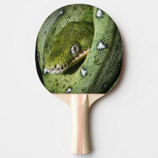 Green tree snake emerald boa in Bolivia Ping Pong Paddle