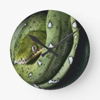 Green tree snake emerald boa in Bolivia Round Clock