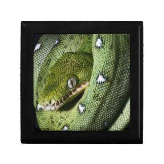 Green tree snake emerald boa in Bolivia Small Square Gift Box