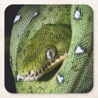 Green tree snake emerald boa in Bolivia Square Paper Coaster