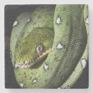 Green tree snake emerald boa in Bolivia Stone Coaster