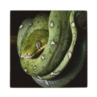 Green tree snake emerald boa in Bolivia Wood Coaster