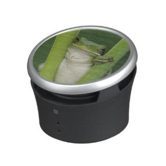 Green Treefrog, Hyla cinerea, adult, Lake Bluetooth Speaker