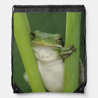 Green Treefrog, Hyla cinerea, adult, Lake Drawstring Bag