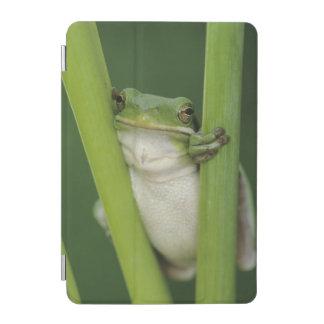 Green Treefrog, Hyla cinerea, adult, Lake iPad Mini Cover