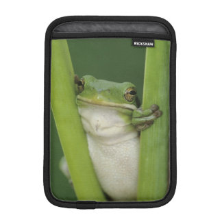 Green Treefrog, Hyla cinerea, adult, Lake iPad Mini Sleeve