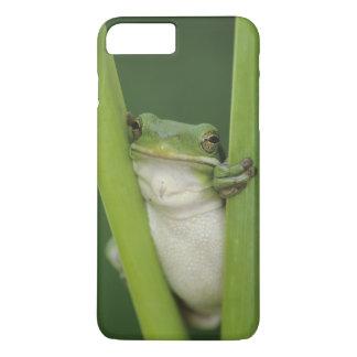 Green Treefrog, Hyla cinerea, adult, Lake iPhone 8 Plus/7 Plus Case