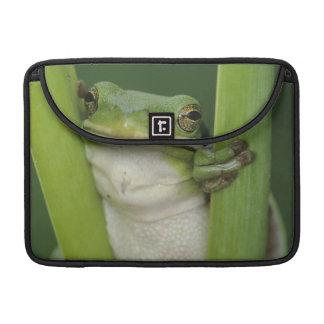 Green Treefrog, Hyla cinerea, adult, Lake Sleeve For MacBook Pro