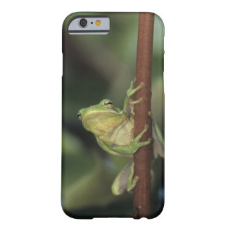 Green Treefrog, Hyla cinerea, adult on yellow Barely There iPhone 6 Case