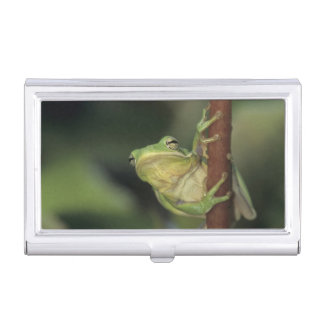 Green Treefrog, Hyla cinerea, adult on yellow Business Card Holder
