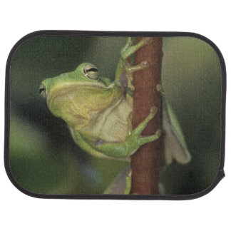 Green Treefrog, Hyla cinerea, adult on yellow Car Mat