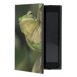 Green Treefrog, Hyla cinerea, adult on yellow Case For iPad Mini