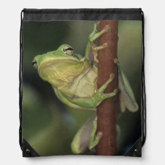Green Treefrog, Hyla cinerea, adult on yellow Drawstring Bag
