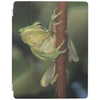 Green Treefrog, Hyla cinerea, adult on yellow iPad Cover