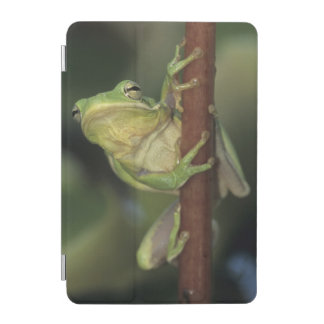 Green Treefrog, Hyla cinerea, adult on yellow iPad Mini Cover