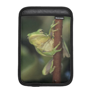 Green Treefrog, Hyla cinerea, adult on yellow iPad Mini Sleeve