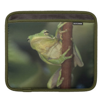 Green Treefrog, Hyla cinerea, adult on yellow iPad Sleeve