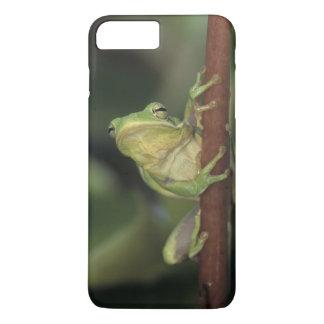 Green Treefrog, Hyla cinerea, adult on yellow iPhone 8 Plus/7 Plus Case