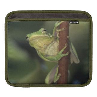Green Treefrog, Hyla cinerea, adult on yellow Sleeve For iPads