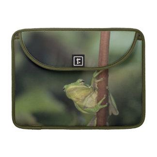 Green Treefrog, Hyla cinerea, adult on yellow Sleeve For MacBook Pro