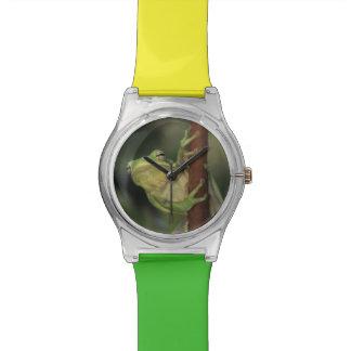 Green Treefrog, Hyla cinerea, adult on yellow Watch